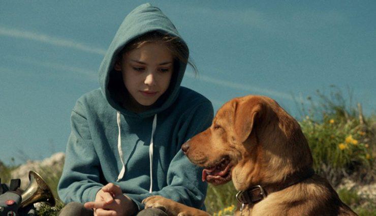 Beyaz Perdeye Yansıyan Köpek Hikâyeleri Sinema Severlerle Buluşuyor