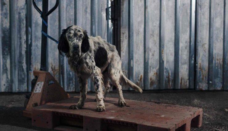 Sokak Hayvanları İçin Patiler için Yaz Partisi Ataşehir'de