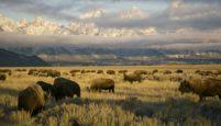 """""""Amerika'nın Ulusal Parkları"""" Nat Geo WILD'da Yayınlanıyor"""