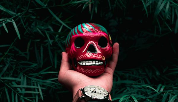 Meksika'nın Vahşi Yüzü Nat Geo WILD'da