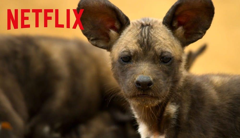 Netflix, Yeni Belgesel Dizisi Gezegenimiz'in (Our Planet) Resmi Fragmanını Paylaştı