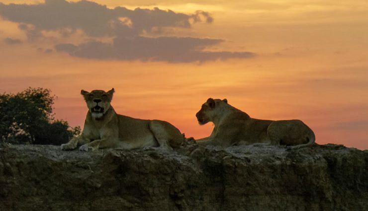 Yırtıcılar Diyarı National Geographic WILD'da İzleyiciyle Buluşuyor