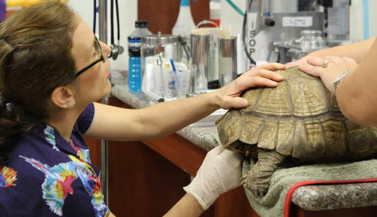 Egzotik Hayvanlara İlk Yardım  Yeni Bölümleriyle Nat Geo People'da Ekranlara Geliyor