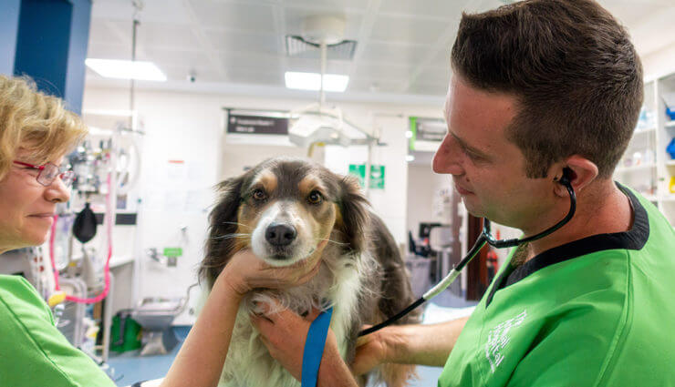 Bondi Veterineri Nat Geo People'da